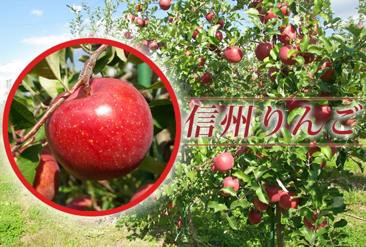 石井味噌 信州りんご