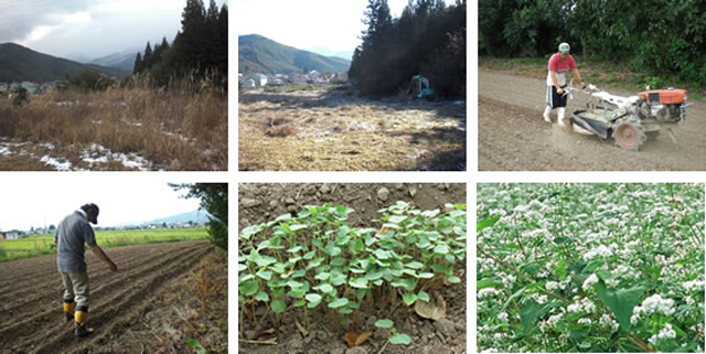 信州安曇野産の自家農園で栽培したそば